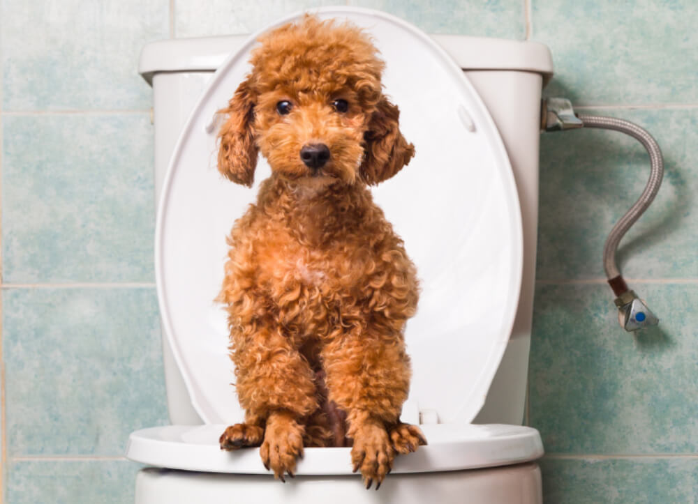 What Is Healthy Poop-featured