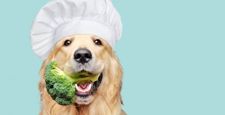 whole food diet for dogs