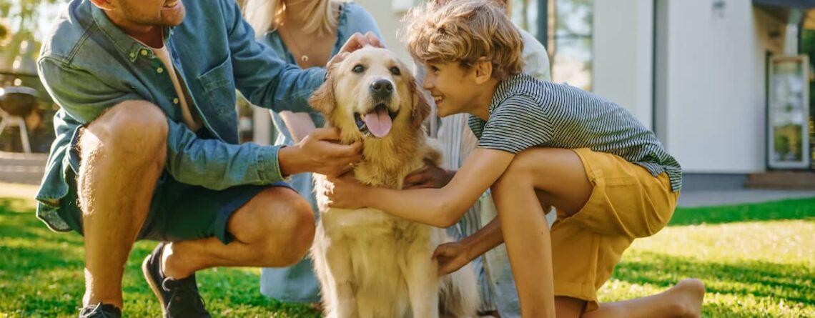 best protein for dogs